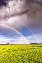 UK, Scotland, North Berwick, rainbow over a field - SMAF00799