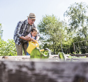 Grandfather and granddaughter in the garden watering plants - UUF11312
