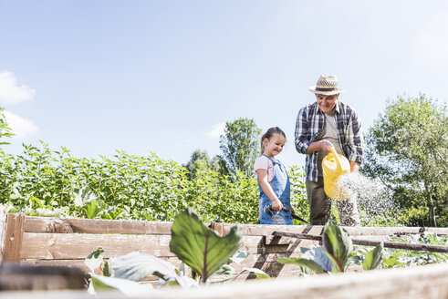 Grandfather and granddaughter in the garden watering plants - UUF11315