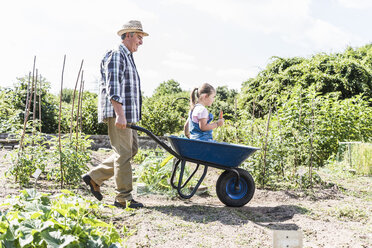 Grandfather pushing wheelbarrow with granddaughter in the garden - UUF11324