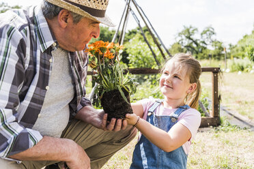 Grandfather and granddaughter in the garden with flower - UUF11333