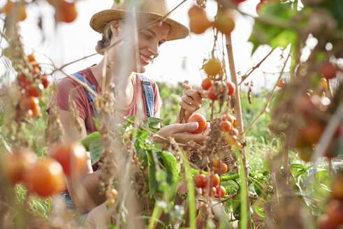 Young farmer picking ripe tomatoes - PACF00062