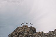 Spain, seagull setting off from a rock - SKCF00312