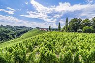 Austria, Styria, Gamitz, Wine estate and vinyards - THAF01953