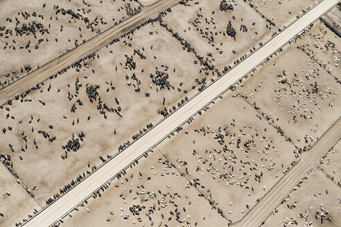 USA, Aerial photograph of Beef Cattle feed lot near Greeley, Colorado - BCDF00325