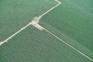 USA, Irrigated corn crop near LaSalle, Colorado - BCDF00328