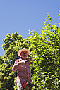 Gardener pruning twigs of apple tree with hedge trimmer - GWF05239