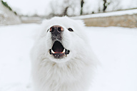 Portrait of white dog in the snow - ZEDF00827
