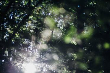 Sunbeam in forest - MJF02160