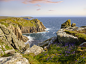 UK, England, Cornwall, Land's End, Bluebell at the cliff coast - SIEF07493