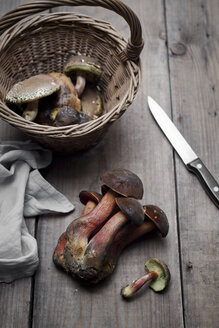 Bay boletus  and portobello mushroom in wicker basket - CZF00306