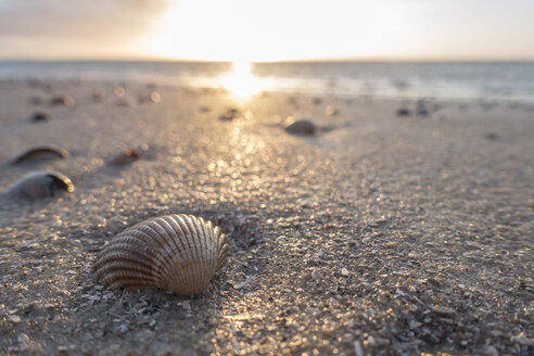 Germany, Lower Saxony, East Frisia, Langeoog, seashells on the beach at sunset - JATF00973