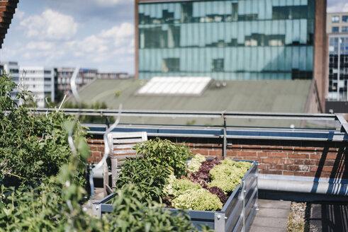 Germany, Duisburg, Urban rooftop garden - KNSF02763