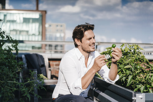 Businessman cultivating vegetables in his urban rooftop garden - KNSF02784