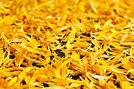 Calendula petals - HAWF00970