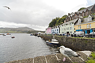 UK, Scotland, Isle of Skye, Portree, harbor - CLPF00138