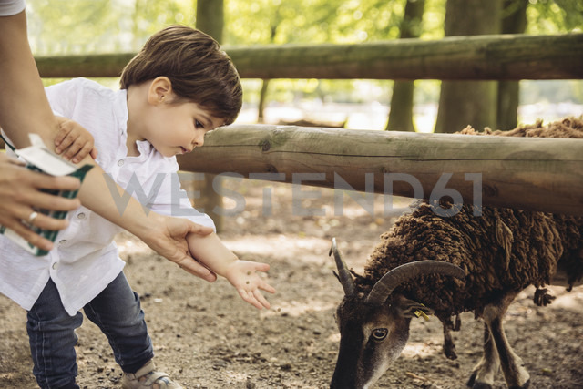 Mother and little son feeding goat in wild park - MFF03959