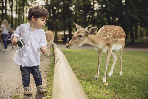Toddler feeding roe deer in a wild park - MFF03968