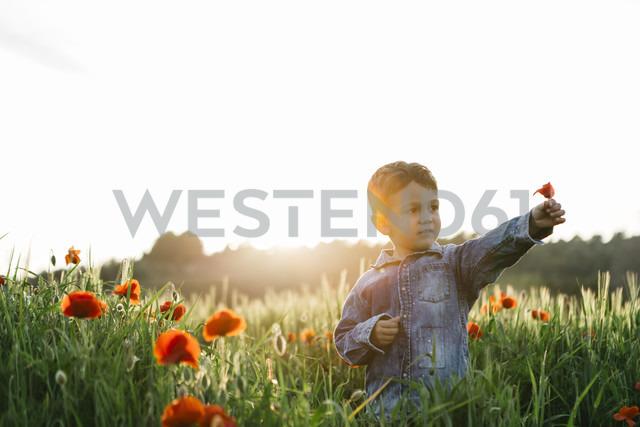 Boy in a poppy field in spring holding poppy - JRFF01439