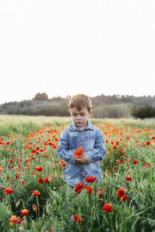 Serious boy in a poppy field in spring - JRFF01442