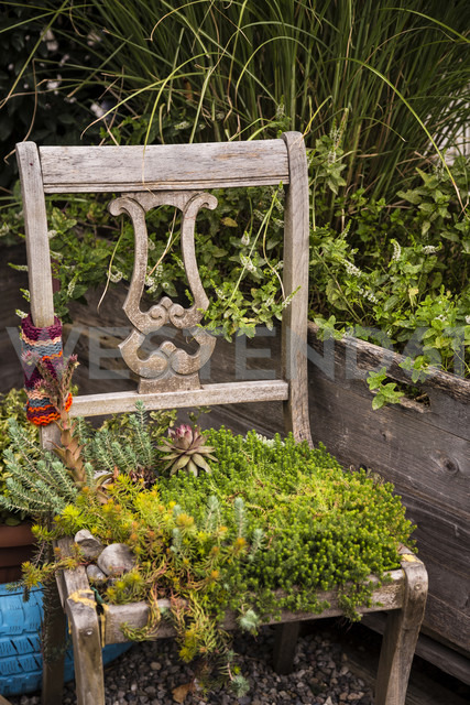 Old chair with plants - NGF00415 - Nadine Ginzel/Westend61