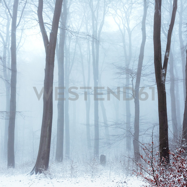 Fog in snowcapped winter forest - DWIF00876