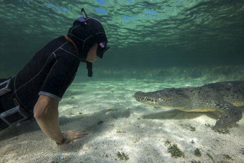 Mexico, Scuba diver watching American crocodile - GNF01406