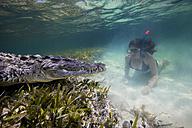 Mexico, Scuba diver watching American crocodile - GNF01415