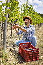 Man harvesting grapes in vineyard - MGIF00126
