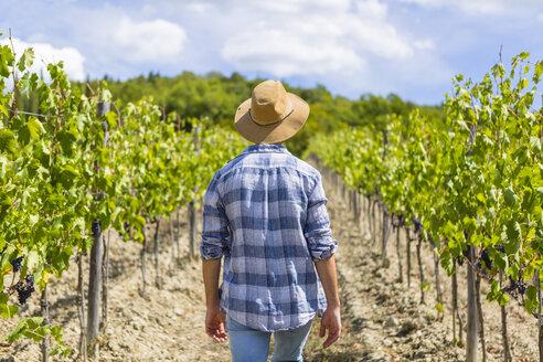 Man walking in vineyard - MGIF00129