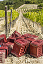 Emoty boxes in a vineyard - MGIF00132