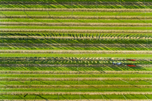 Germany, hop picking, aerial view - MAEF12413