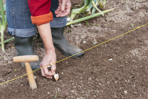 Close-up of woman planting garlic - HAWF00981