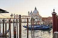Italy, Venice, Santa Maria della Salute at sunrise wih Gondolas on the Canal Grande - MRF01732