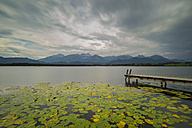 Germany, Bavaria, Allgaeu, Hopfen am See, Hopfensee with jetty and lily pads - WGF01116