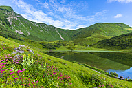 Germany, Bavaria, Allgaeu, view to Schlappolt Lake with  Alpine roses in the foreground - WGF01121