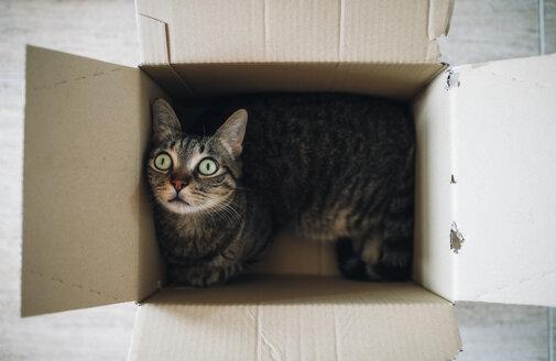 Tabby cat in a cardboard box - RAEF01938