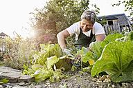 Mature man standing in his garden wearing apron - PDF01393