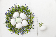 Wreath of Forget-me-not and pussy willows with eggs in the middle - GWF05247