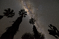 Namibia, Region Khomas, near Uhlenhorst, Astrophoto, Band of Milky Way featuring Galactic Center with palm trees and cactus in foreground - THGF00006