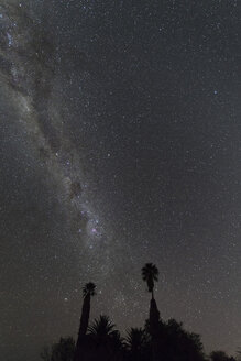 Namibia, Region Khomas, near Uhlenhorst, Astrophoto, Band of southern Milky Way with palm trees in foreground - THGF00012