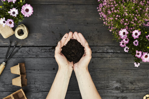 Woman's hands holding garden soil - PDF01412