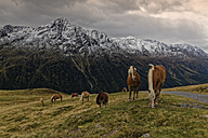 Austria, Tyrol, Oetztal, Soelden, horses on alpine meadow - GFF01031