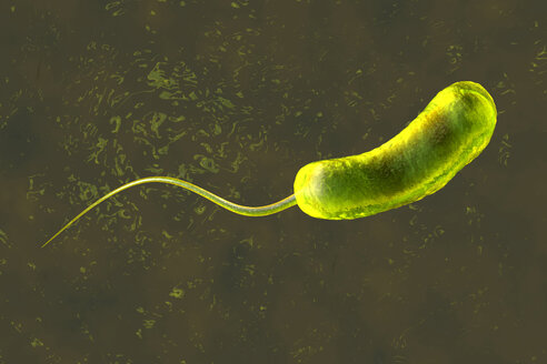3D rendered Illustration of a a convergence to a Vibrio Cholerae Bacterium causing cholera - SPCF00170
