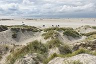 Denmark, Romo, cars on the beach - HWOF00216