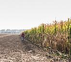 Farmer walking along cornfield - UUF11901