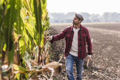 Farmer walking along cornfield examining maize plants - UUF11919