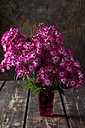 Pink shrub roses in a vase - CSF28351