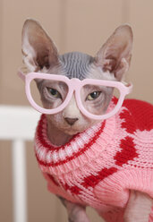 Portrait of Sphynx cat wearing pink pullover and funny glasses - RTBF01074