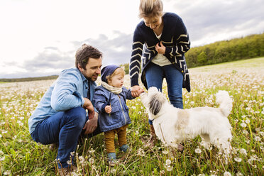 Cute little boy with parents and dog in dandelion field - HAPF02318